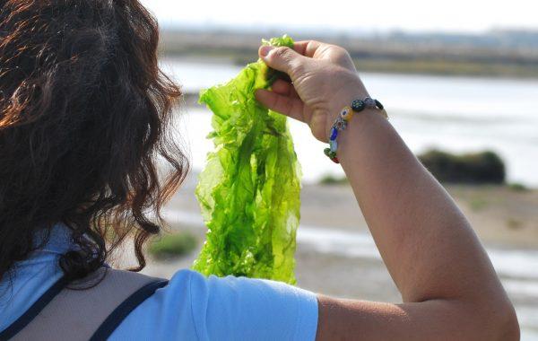 Algas: un valor alimenticio incalculable